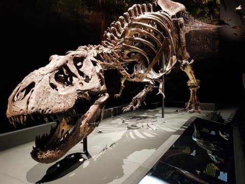 Naturalis-dinozaal-1